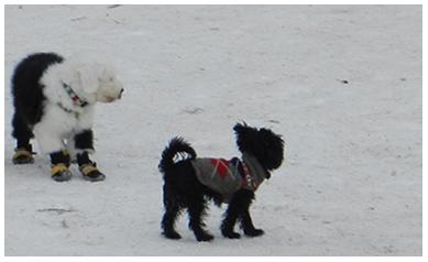 yourewelcomeCA-dog-fashion-trinity-bellwoods-winter-6