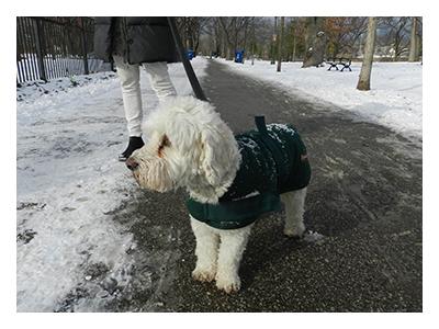 yourewelcomeCA-dog-fashion-WHITE