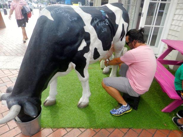 auckland_yourewelcomeca_new_zealand_cow